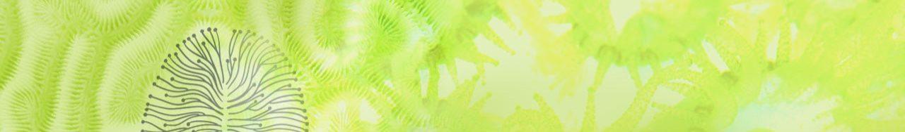 Header Neuropsychologie grün